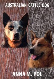 Australian Cattle Dog, Pol Anna M.